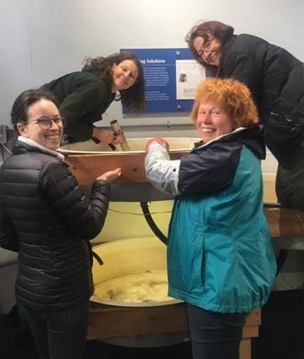 Four women who volunteer to care for young pinto abalone smile at the camera, gathered around a tank full of water.